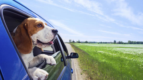 Holiday Pet Travel Guide, Travelchannel.com